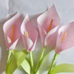 bunga lili kertas