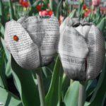 tulip dari koran